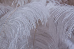 White feather of bird for background Royalty Free Stock Photography