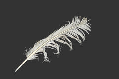 White feather on black. Old sea gull feather on a black background Royalty Free Stock Images