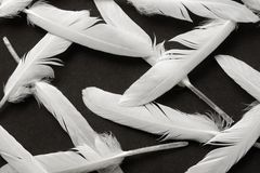 White feather on black. As wallpaper or background Royalty Free Stock Photo