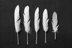 White feather on black. As wallpaper or background Royalty Free Stock Images