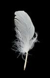 White feather on black background. Close-up white feather, isolated on black Royalty Free Stock Photo