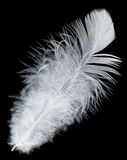 White feather on black background. Close-up white feather, isolated on black Stock Image