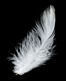 White feather on black background Stock Image