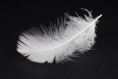 White feather. On black background Stock Images