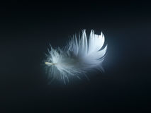 White feather. On black background Stock Image