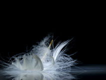 White feather Stock Photo