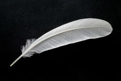 White feather on black background. Close up white feather on black background Royalty Free Stock Image