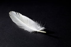 White Feather  on Black Background. Closeup Royalty Free Stock Photo