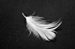 White feather on black background. Macro stock images