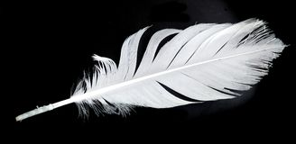 White feather on black. White feather on a black background Stock Photos