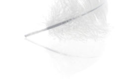 White feather close-up Stock Image