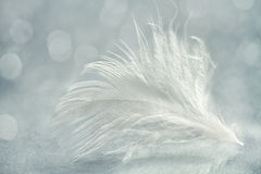 White feather close up Stock Photo