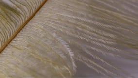 White feather stock footage