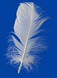 White Feather Cutout Royalty Free Stock Photo