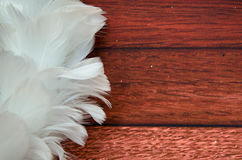 White feather decoration Royalty Free Stock Photo