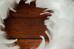White feather decoration Stock Image