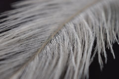 A white feather Stock Image