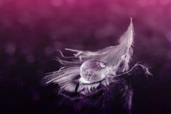 white feather Royalty Free Stock Photo