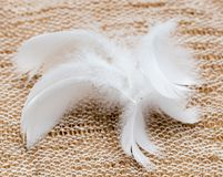 White feather on fabric Stock Image