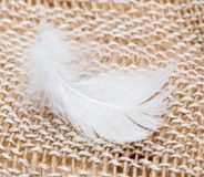 White feather on fabric Royalty Free Stock Image