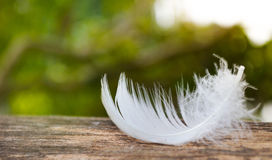 White feather fall on timber. A single white feather, on a lily pad stock photo