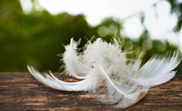 White feather fall on timber. White feather on the wooden timber stock photography
