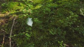 White feather falls in the forest stock video footage