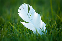 White Feather on Grass Stock Photos