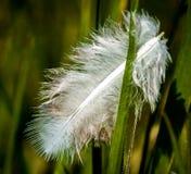 White feather in grass Stock Photos