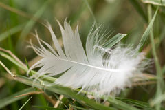 White feather in the grass Stock Photo