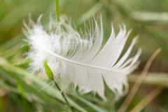 White feather in the grass Royalty Free Stock Images