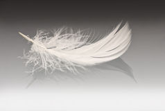 White feather on grey Stock Photography
