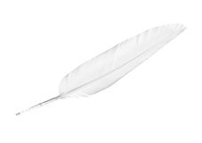 White Feather Stock Photos
