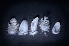 White feather Royalty Free Stock Image