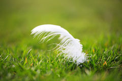 White feather lying on the grass Royalty Free Stock Image