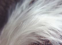 White feather. Macro Stock Images