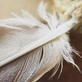 White feather Royalty Free Stock Images