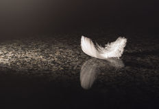 White feather on marble. A white feather on marble Stock Photography