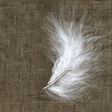 White feather on the natural material. Original natural background Stock Photo