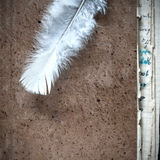 White feather on an old book. Close up photo Stock Photography