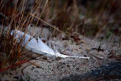 White feather. In old grass Stock Photography