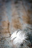 White Feather on Old Timber Background Stock Images