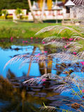 WHITE FEATHER PAMPAS GRASS PLUMES RELAXING POND TOBAGO NATURE Stock Image