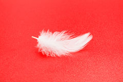White feather on red Stock Images