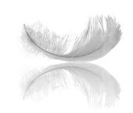 White feather reflection royalty free stock photo