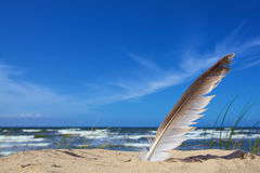 White feather on sky blue background stock image