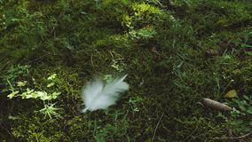 White Feather Falls In The Forest stock footage