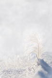 White feather on snow Stock Photo
