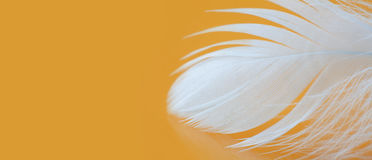 White feather textured pattern photo. Chicken plumage macro view on yellow background. Tenderness concept. Shallow depth Stock Photo
