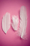 White  feathers Stock Images